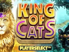 King of Cats logo